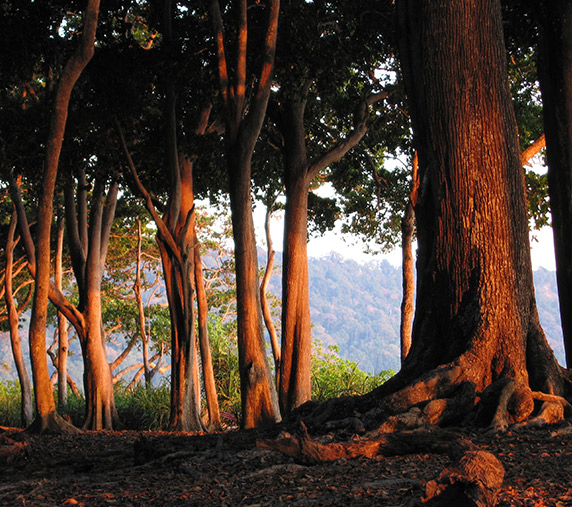 Barefoot Holidays Best of Havelock and Port Blair